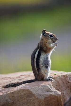 hastings: Ground squirrel, Hastings Mesa, Colorado, USA