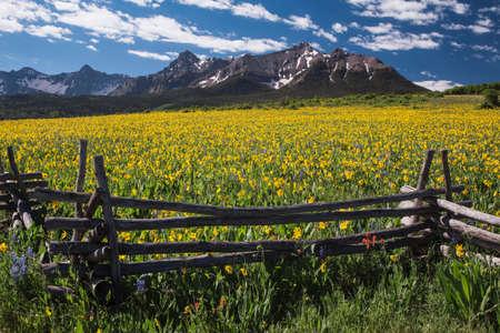 mules: Yellow Mules near field Stock Photo