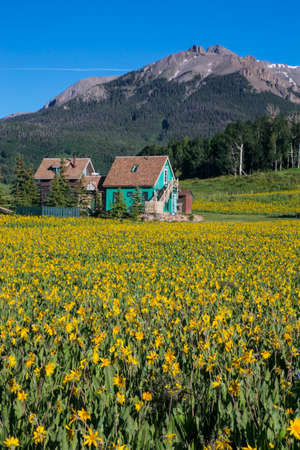 mules: Yellow Mules near flower lined road and green mountain house, Hastings Mesa, Ridgway, Colorado, USA
