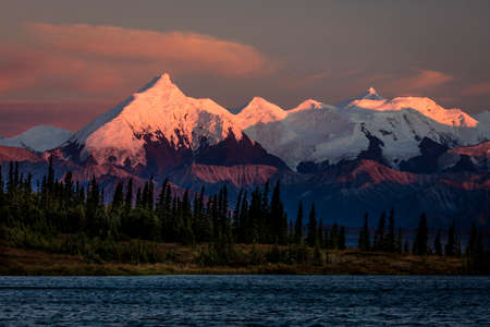 Sunset on Mount Denali previously known as Mount McKinley, the highest mountain peak in North America, at 20, 310 feet above sea level. Alaska Mountain Range, Denali National Park and Preserve.