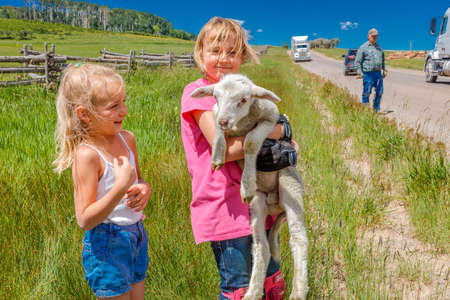 July 17, 2016 - Little girl holds sheep on Hastings Mesa near Ridgway, Colorado from truck