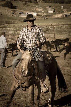 MAY 23, 2017 - LA SAL MOUNTAINS, UTAH -Cowboys brand Cattle near La Sal, Utah off Route 46 near Colorado-Utah border - near Manti-La Sal National Foest Editorial
