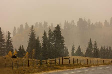 OCTOBER 8, 2014 - New Mexico, USA - Autumn Color Landscape along highway 17 Foto de archivo - 111979634