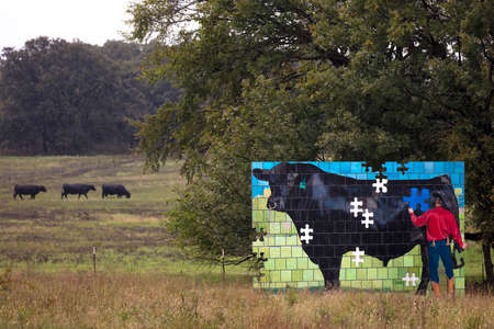 October 12, 2018 - New Mexico, USA - Painting of man painting cow in field with three real cows, New Mexico