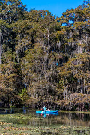 OCTOBER 14, 2018 - Lafayette, Louisiana, USA - Cajun Swamp & Lake Martin, near Breaux Bridge and Lafayette Louisiana Foto de archivo - 111979698