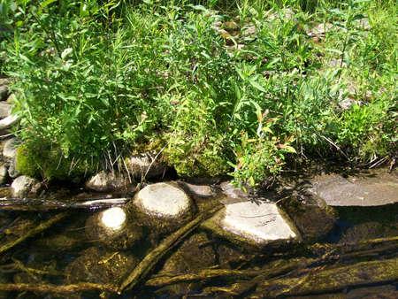 river bank: AuSable River Bank Stock Photo