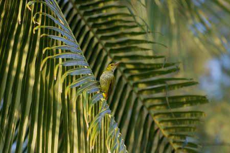 Bird on leaf
