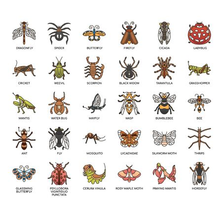 Insect, Thin Line and Pixel Perfect Icons