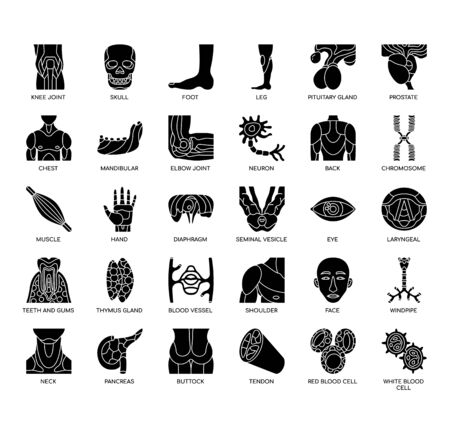 Human Organ , Thin Line and Pixel Perfect Icons Vectores
