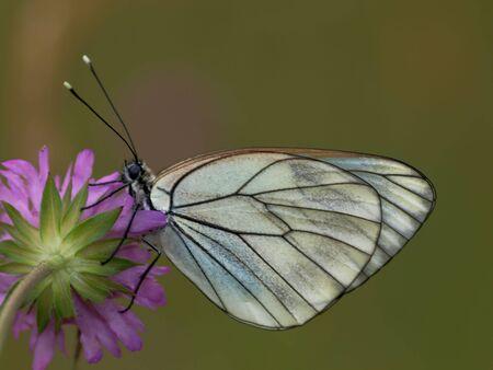 nice butt: NATURE