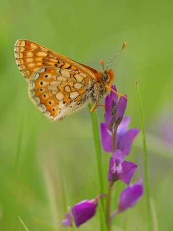 butterfly Stock Photo - 11508744