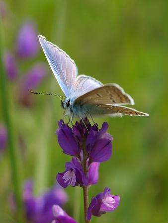 nice butt: butterfly