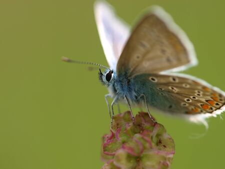 butterfly Stock Photo - 11514725