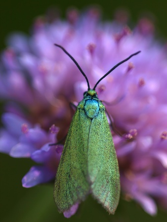butterfly Stock Photo - 11514788