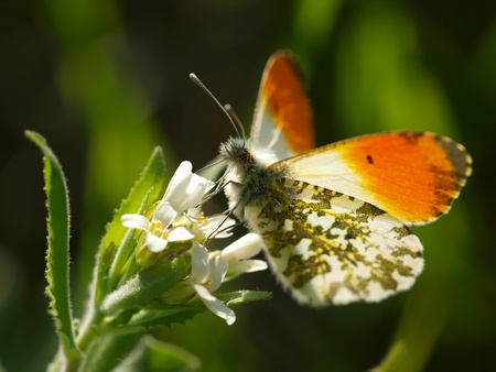 butterfly Stock Photo - 11514730