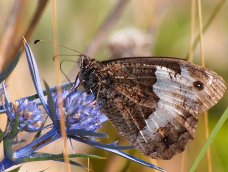 butterfly Stock Photo - 11515099