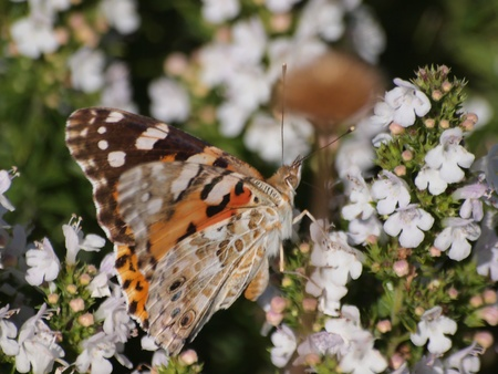 butterfly Stock Photo - 11515090