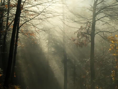 WOODS IN EARLY MORNING FOGG Stock Photo - 12898842