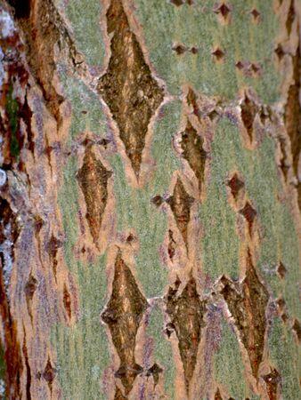 BACKGROUND, tree bark Stock Photo - 12899057