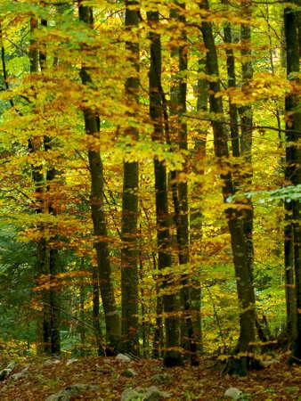 autmn: TREE