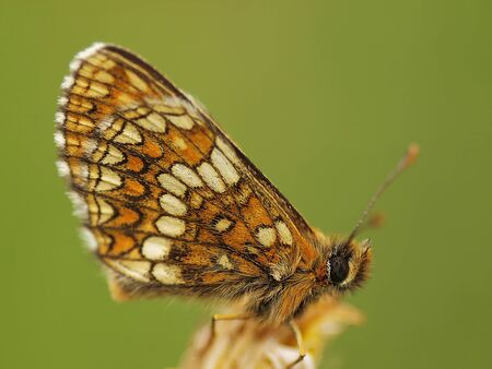 BUTTERFLY Stock Photo - 15452405