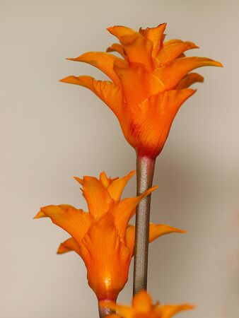 FLOWER Stock Photo - 16774839