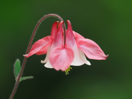 FLOWER Stock Photo - 16774722
