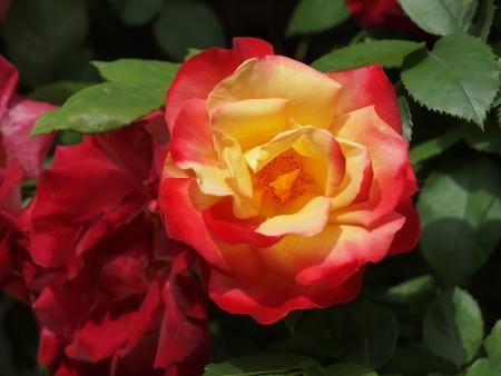 FLOWER Stock Photo - 16774813
