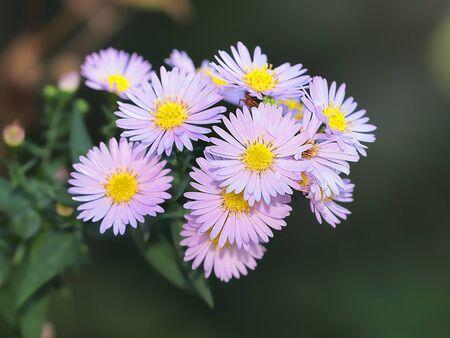 FLOWER Stock Photo - 16774922