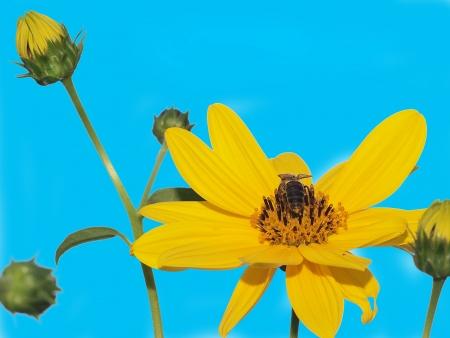 FLOWER Stock Photo - 16774902