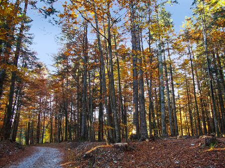 AUTUMN IN THE FOREST Stock Photo - 17285570