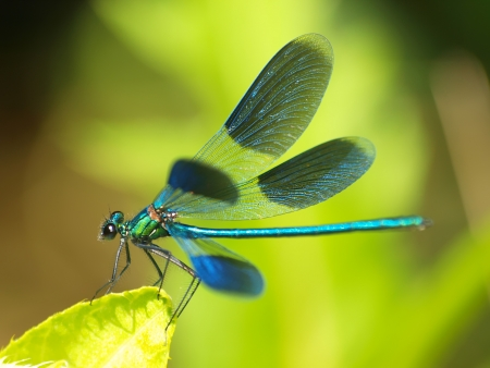 DRAGONFLY Banque d'images