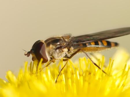 flies photo