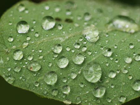 raindrops on leaf photo
