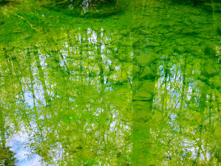 reflection of trees in calm water photo