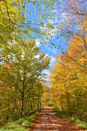 fall winter: AUTUMN IN THE FOREST