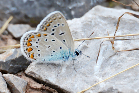 Butterfly on the top of the stone background.
