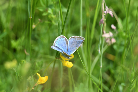 Butterfly on the top of the flower with blur background. Stock Photo