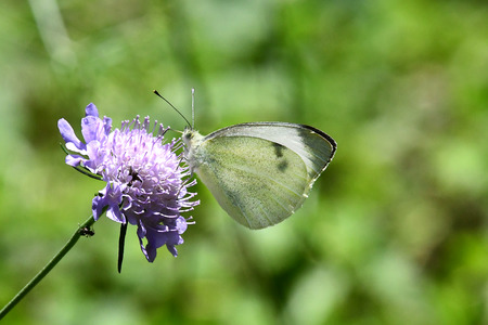 Butterfly on the top of the flower with blur background