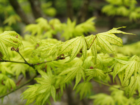 leafs: green leafs Stock Photo
