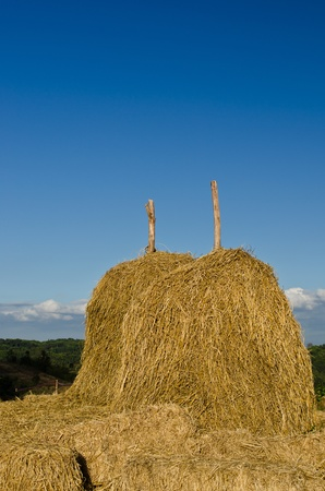 golden straw stack on a hill of thailand