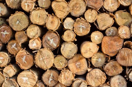 pile of firewood logs background photo