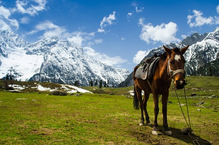brown horse on the meadow with snow mountain in background photo