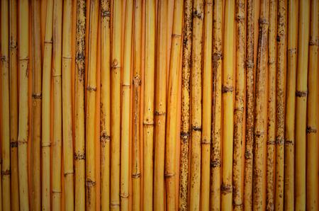 texture of bamboo Stock Photo