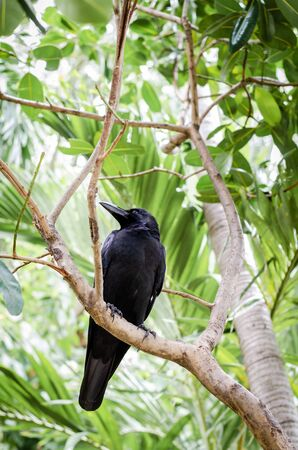 black crow perched on branch against green  leaf background