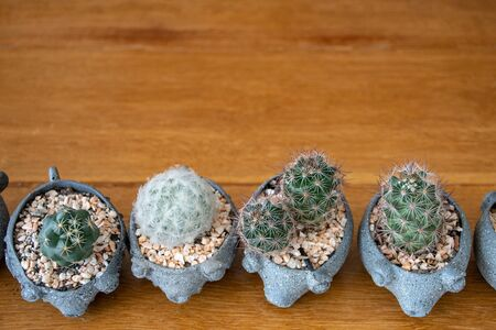 small cactus in mini pot on wooden table Stock Photo