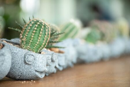 close up of small cactus in mini pot on woodden table Stock Photo - 126179578