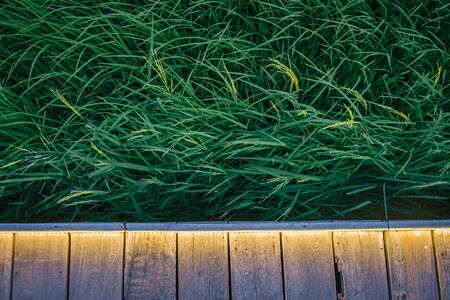 woodden plank against rice field Stock Photo