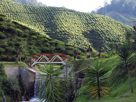cameron highlands: Tea plantation in Cameron Highlands Malaysia Stock Photo