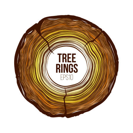 Vector tree rings slice with crack. Annual life texture. Woodgrain pattern